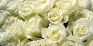 Dia 02 de novembro é dia de Finados, dia de homenagear quem já partiu.