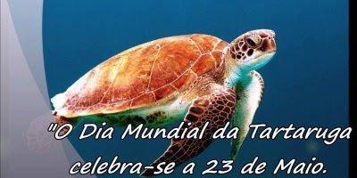Dia 23 de maio é Dia Mundial da Tartaruga, o réptil mais antigo do planeta!!!