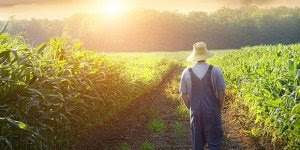 Dia 28 de julho é Dia do Agricultor, parabéns a todos desta área!!!