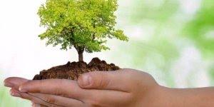 Dia Mundial do Meio Ambiente é dia 5 de Junho - Saiba mais sobre este dia!
