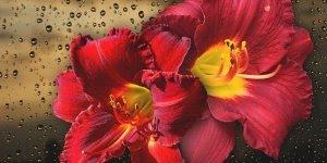 Mensagem de Dia dos Namorados para namorada! Você é um presente de Deus!!!
