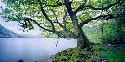 Mensagem para o dia da árvore - Faça sua parte respeitando a natureza!