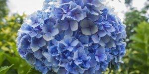 Novembro azul, mês de procurar um urologista e prevenir o câncer de próstata!!!