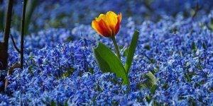 Novembro azul, mês do alerta para os homens contra câncer de próstata!!!