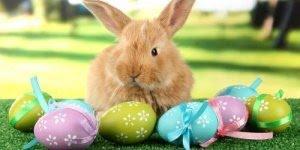 Por que o ovo e o coelho são símbolos da Páscoa? Descubra!