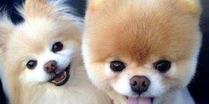 Mensagem de aniversario Facebook, com imagens fofas de animais!