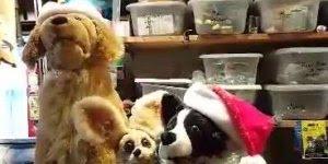 Feliz Natal! Veja como são fofos estes cães cantores de Natal!!!