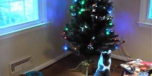 Gatos e árvores de Natal, uma combinação que não deu muito certo kkk!