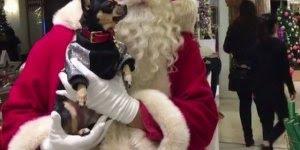 Mensagem de Feliz Natal para todos amigos que amam seus pets!!!