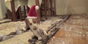 Que fofura, imagina ganhar aquilo que mais gosta de presente de natal!!