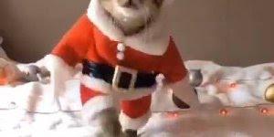 Vídeo com gato vestido de papai noel, ele já entrou no clima do Natal!