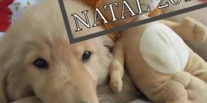 Vídeo de feliz natal com imagens de cachorros fofos, para enviar pelo Whatsapp!