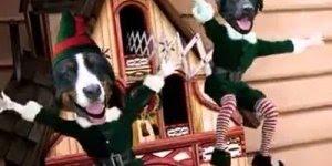 Vídeo de Natal com cachorros lindos, para quem ama os Pets!!!