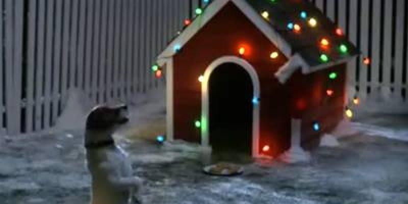 Videos de natal com animais, veja que fofo o natal desse cachorrinho!