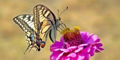 Hoje é sexta-feira! Desejo a você uma sexta abençoa e cheia de paz!!!