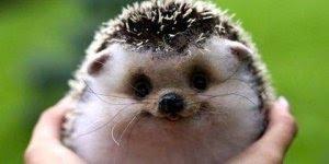 Mensagem para sexta-feira, com lindas imagens de animais!!!