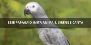 Papagaio sabe imitar vários coisas, é muito fofo! Ele também canta!!!