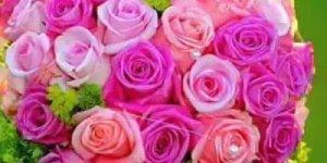 Hino Seguro estou, com lindas rosas para compartilhar no Facebook!