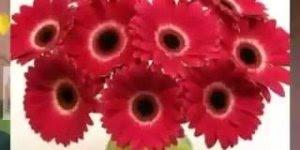 Imagens de flores com musica gospel - Para compartilhar no Facebook!