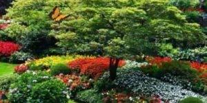 Imagens de flores com musica gospel, perfeito para enviar as suas amigas!