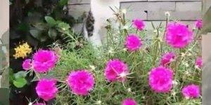 Meu Barquinho Giselli Cristina com Moisés Cleyton, com lindas flores!