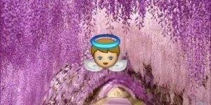 Oração da Felicidade Papa Francisco, veja com coração aberto!!!