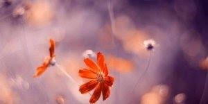 Arte de fotografar flores, simplesmente lindo trabalho, confira!!!