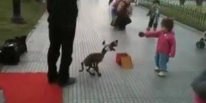 Cachorro marionete faz muito sucesso com as crianças, perfeito!
