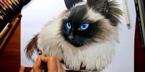 Desenho de gatinho siamês, cada traço é perfeito, vale a pena conferir!!!