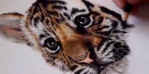 Desenho de tigre feito a lápis, simplesmente perfeito, vale a pena conferir!!!