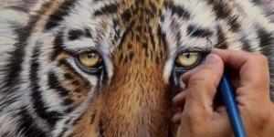 Desenho de tigre simplesmente perfeito, olha só que obra de arte!!!