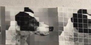 Foto de um cachorro se transforma em 4, veja que coisa incrível!