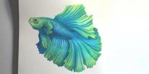 Pintura de peixe cheio de detalhes e técnicas de combinação de cor!!!