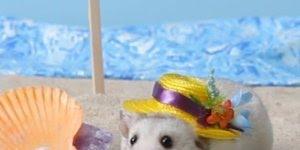 Como fazer chapéus para seus animais, veja como é simples e divertido!