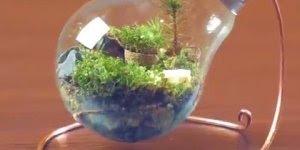 Como fazer um mini jardim usando lâmpadas incandescentes, confira!