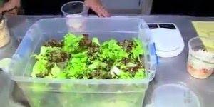 Aprenda a fazer salada no pote, uma ideia muito legal que esta fazendo sucesso!