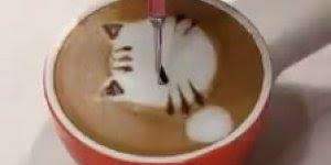 Café com gatinho? Veja mais essa novidade que estão fazendo!