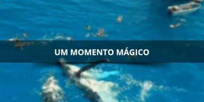 Um momento magico para estes turistas que nadaram com uma baleia em auto mar!!!