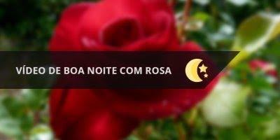 Vídeo de boa noite com rosa vermelha, para enviar ao seu amor...